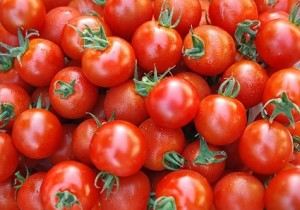 All About Tomatoes